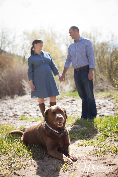 pregnancy pictures with the dog