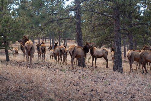 Elk Lookout Mountain Golden CO